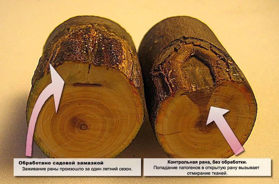 Замазка для деревьев