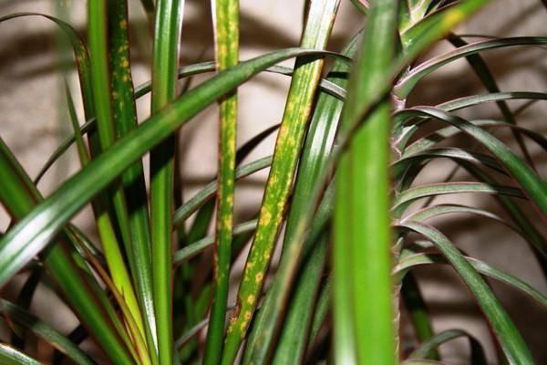 Клещ на растениях