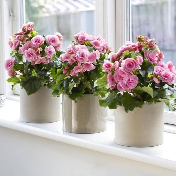 Цветы на окне фото комнатные