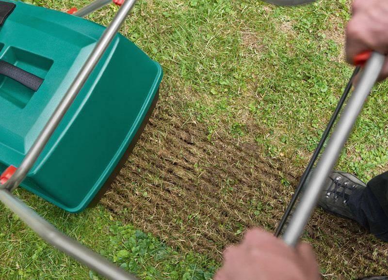 Сроки посева газонной травы осенью