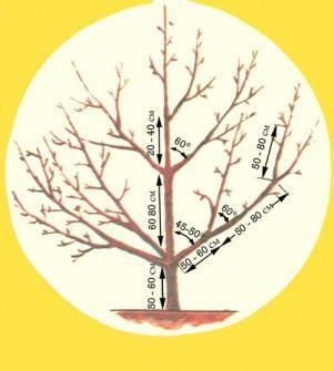 Как заставить яблоню плодоносить