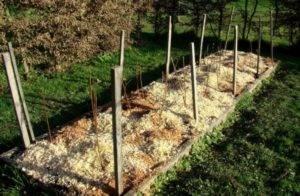 Посадка и обрезка малины осенью