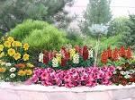 Фото красивых клумб с цветами
