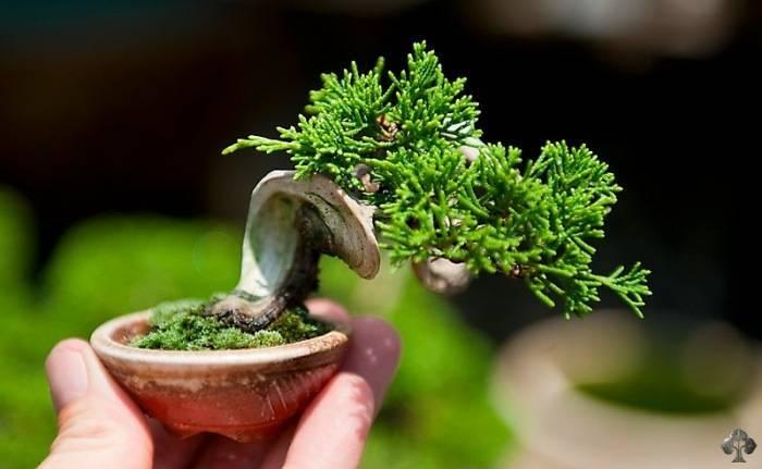 Маленькое дерево