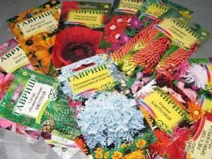 Посадка семян цветов под зиму