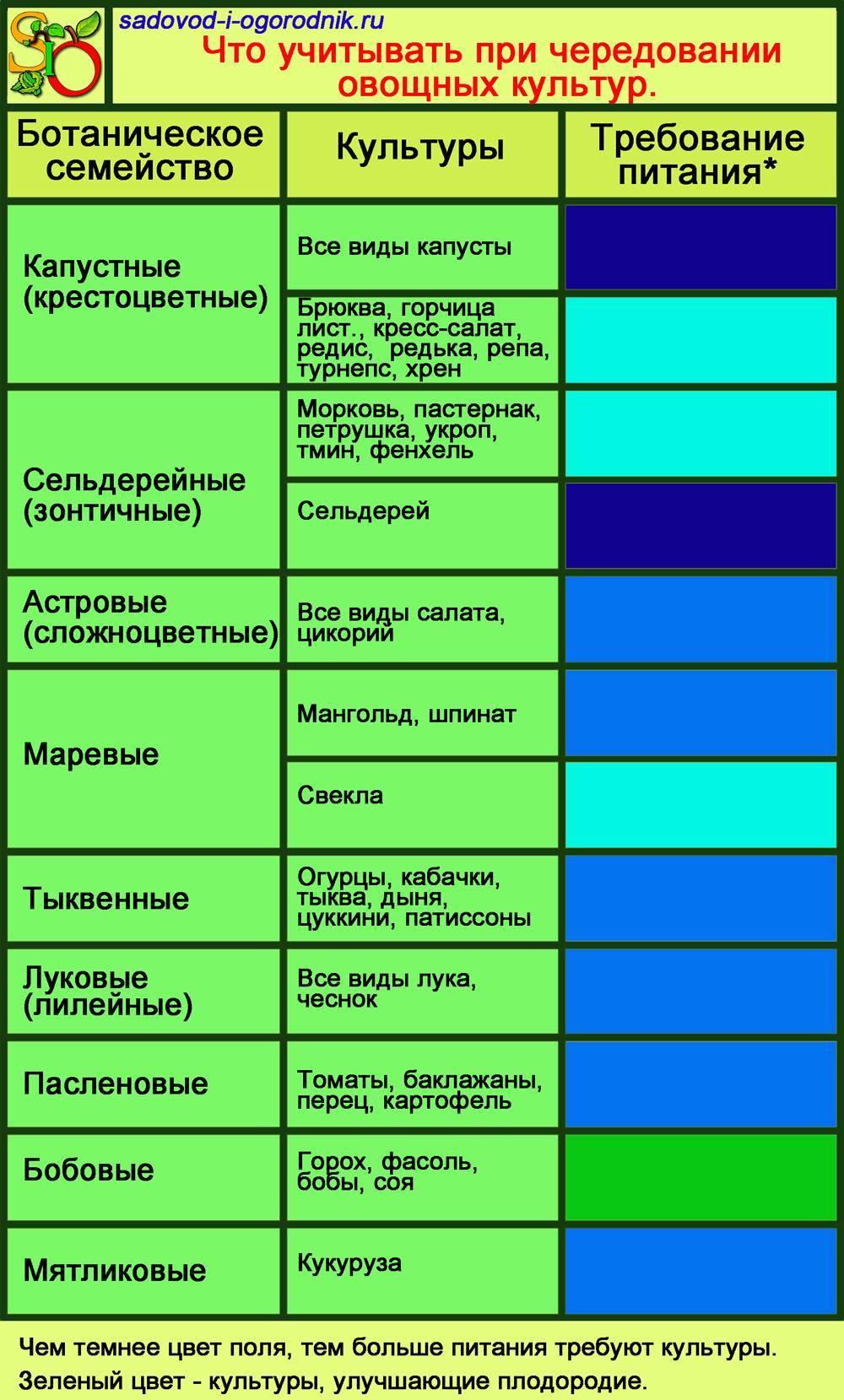 Севооборот овощей на грядках таблица