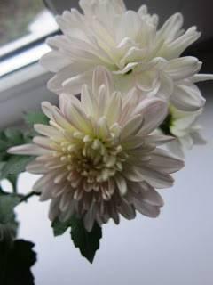 Цветок зеленый с белыми полосками