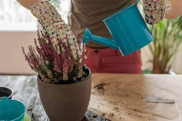 Как полить цветы дрожжами