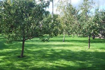 Плодовые деревья в ландшафтном дизайне фото