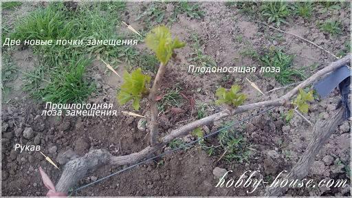 Весенние работы на винограднике в украине