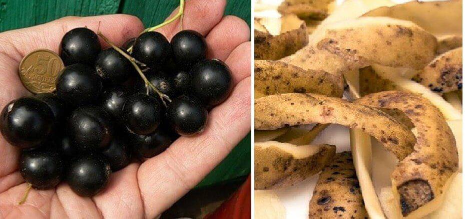 Картофельные очистки как удобрение для каких растений