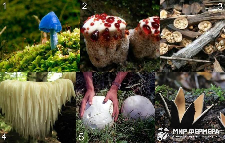 Картинки съедобных и несъедобных грибов с названиями