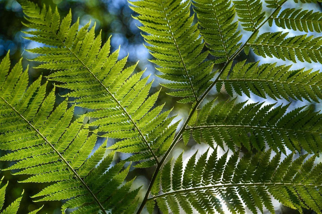 Травянистые растения картинки
