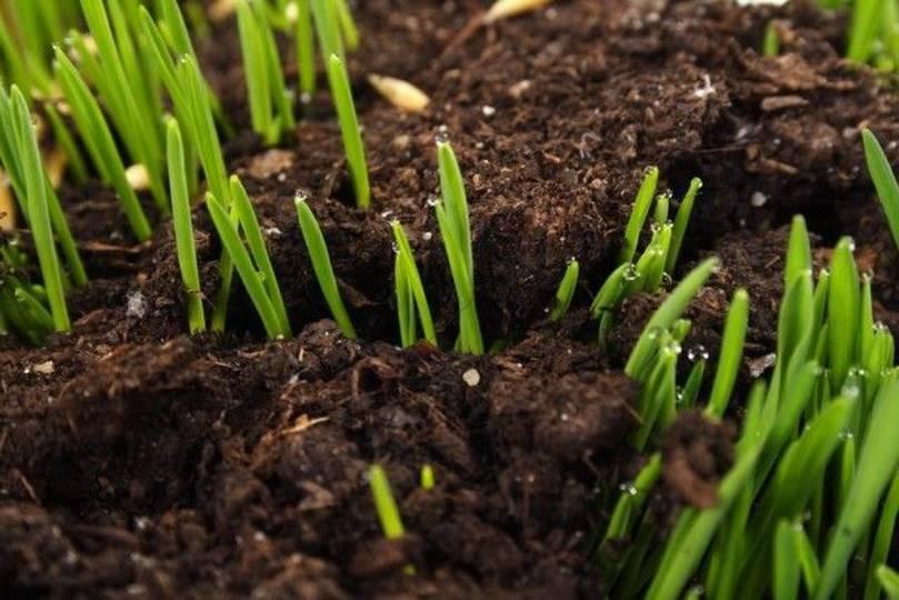 Как раскислить почву доломитовой мукой