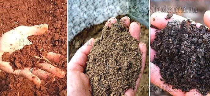 Как повысить плодородие почвы на дачном участке