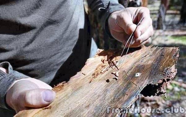 Борьба с жуком короедом в деревянном доме
