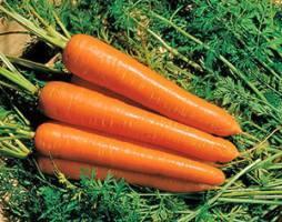 Какого цвета бывает морковь