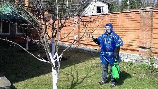 Обработка растений медным купоросом