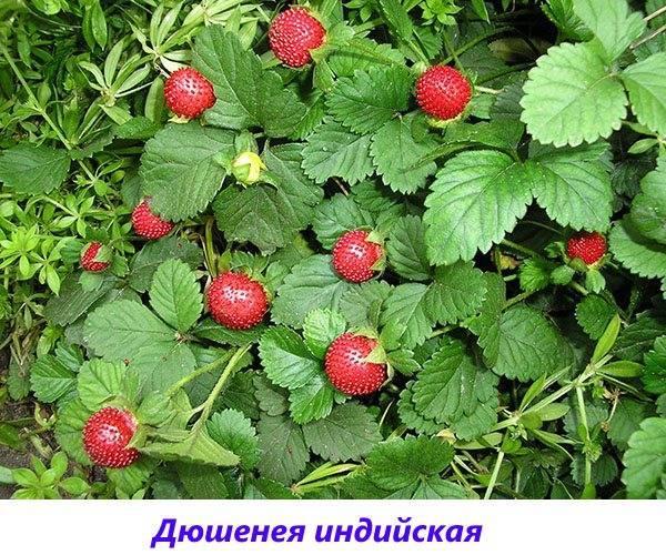 Дачные растения фото и названия