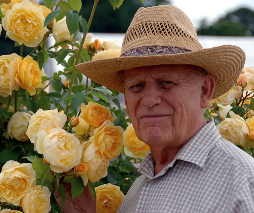 Розы остина лучшие сорта для подмосковья