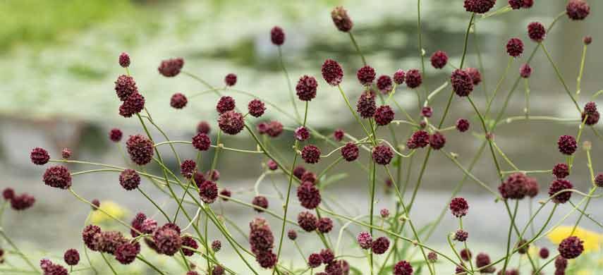 Какие растения растут на кислых почвах