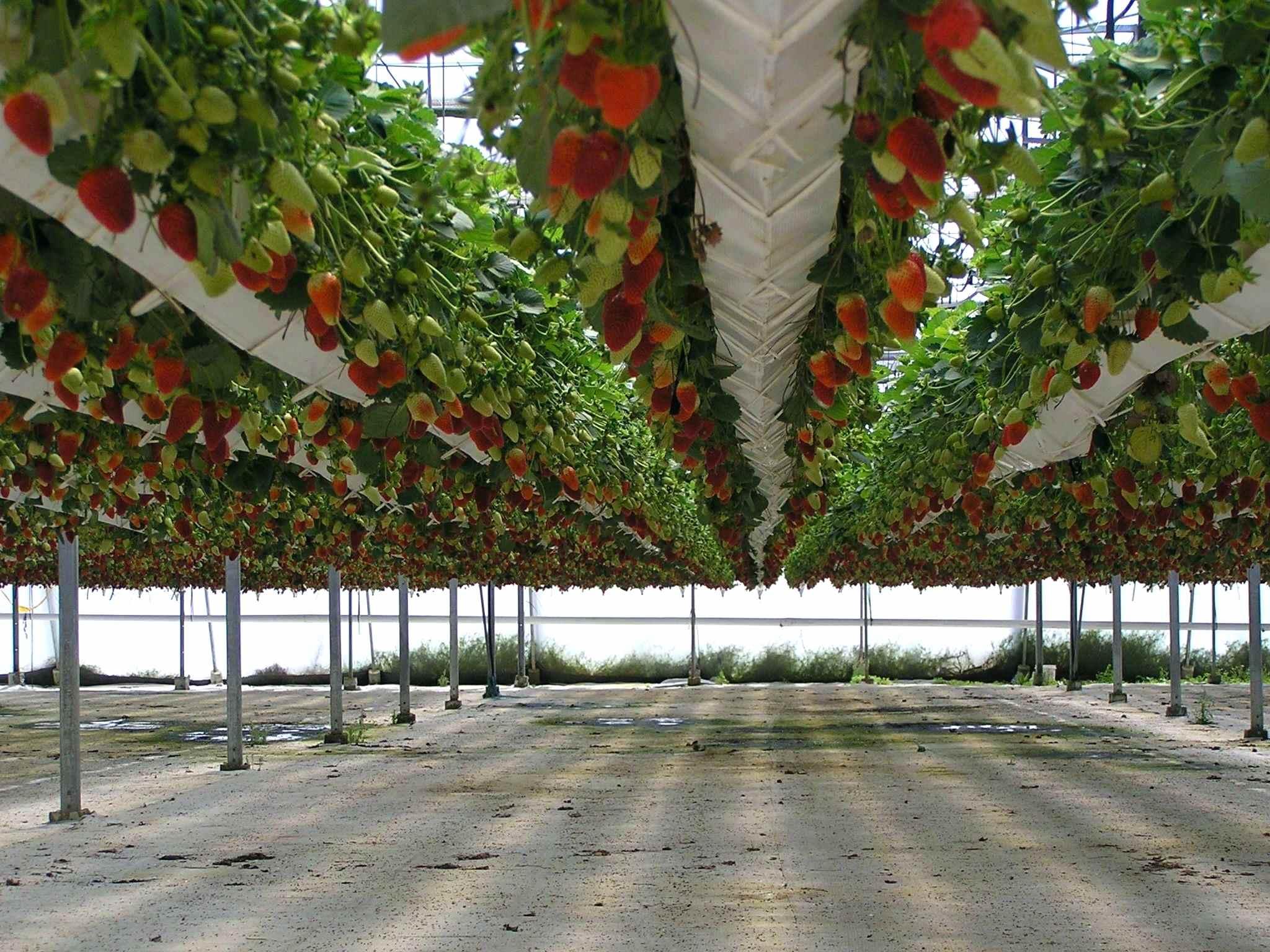 Выращивание на гидропонной системе