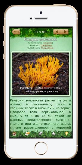 Определить грибы по фото