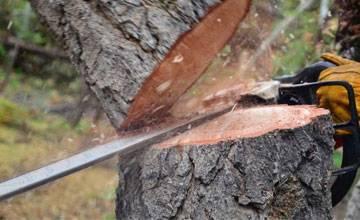 Можно ли пилить деревья на своем участке