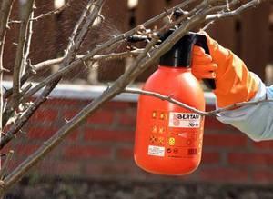 Лечение плодовых деревьев осенью