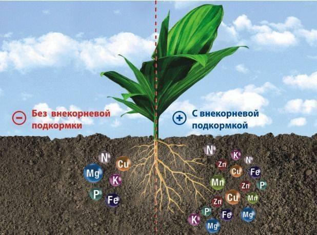 Система внесения удобрений