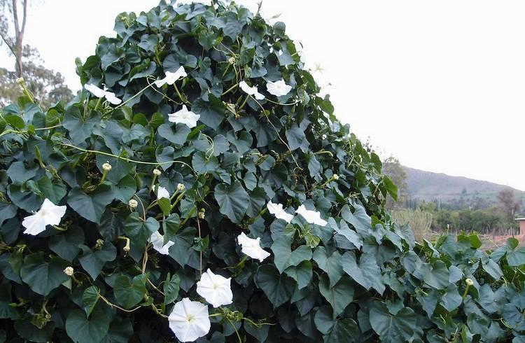 Цветы на даче фото и название однолетние