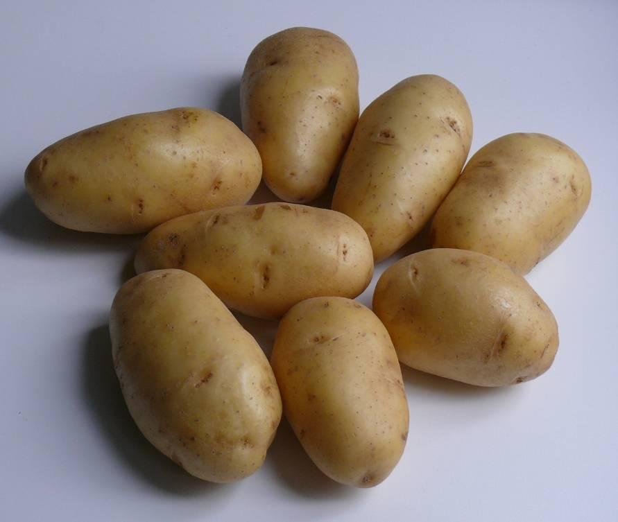 Столовые сорта картофеля