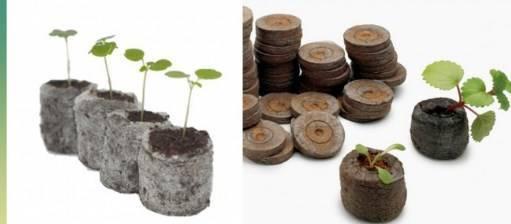 Как вырастить рассаду баклажанов в домашних условиях