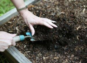 Обеззараживание земли перед посадкой рассады