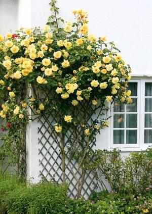 Как оформить газон перед домом фото