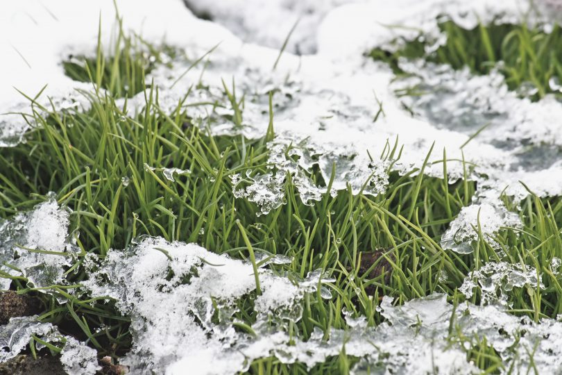 Подготовка газона к зиме в подмосковье