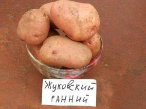 Сорт картофеля для фри