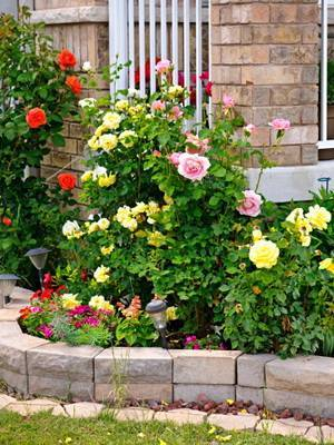 Композиция на клумбе с розами