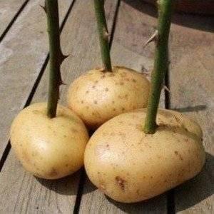 Огородные секреты и хитрости