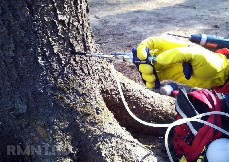 Обработка леса от вредителей