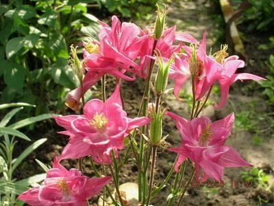 Цветы для садового дизайна