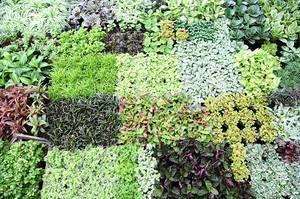 Сочетание растений при посадке