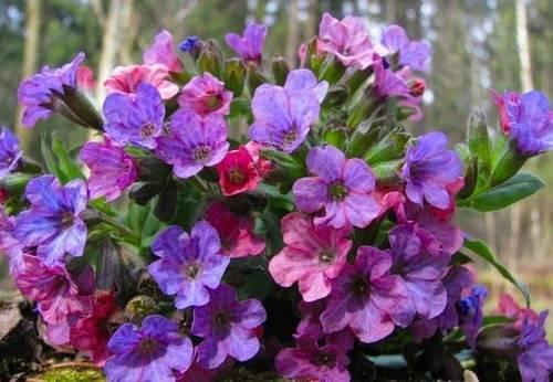 Бордюр из цветов вдоль дорожки