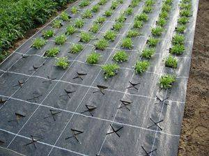 Нетканый материал для огорода