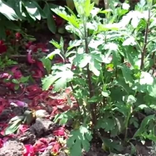 Растения осенью картинки