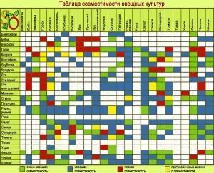 Совместимость огородных культур при посадке таблица
