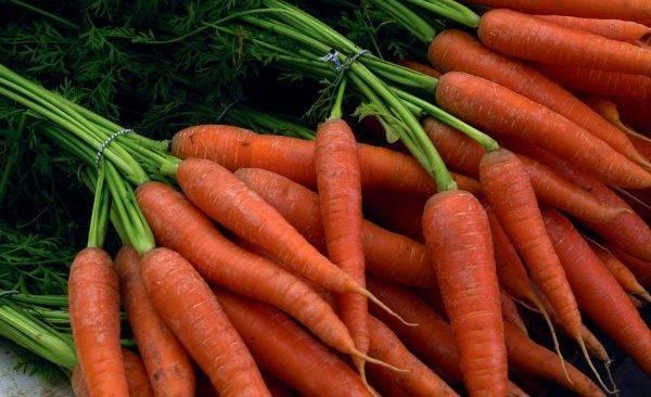 Почему трескается морковь в земле
