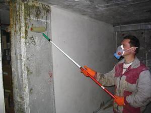 Как избавиться от слизняков в подвале