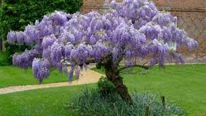 Сад для аллергиков