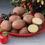Каталог сортов картофеля